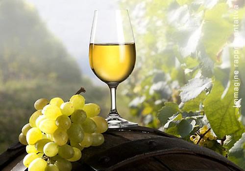 vini-bianchi-2